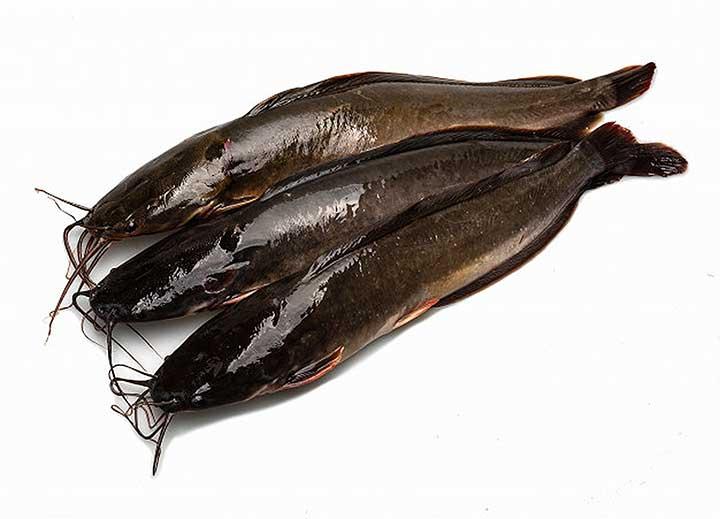 8 Manfaat Ikan Lele Untuk Kesehatan